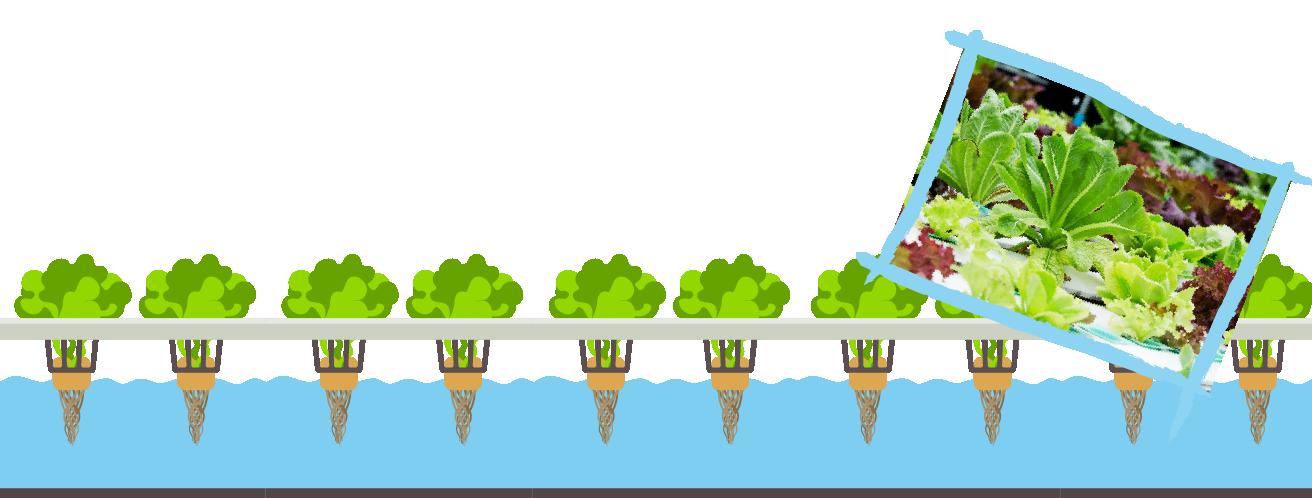 BLOG-jardin